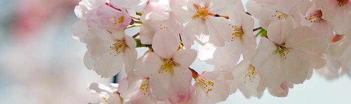 [Fotó: Itt a tavasz...]